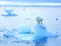 Arctic-melting