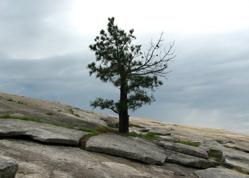 5188-a-single-tree-growing-on-a-rock-face-of-a-mountain-pv